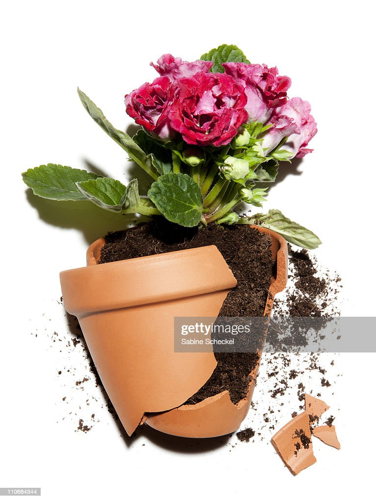 Broken Flower Pot With Plant Stock Photo | Getty Images