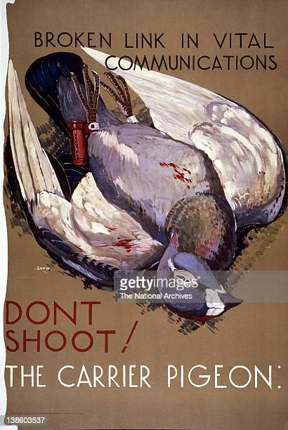 Broken Link in Vital Communication Don't Shoot The Carrier Pigeon WWII poster