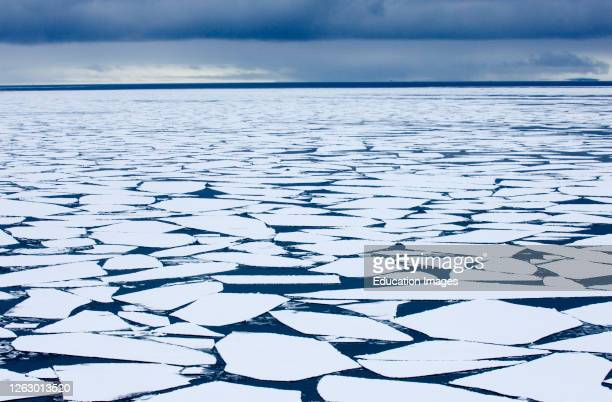Broken pack ice, Brash Ice in Weddell Sea, Antarctic.