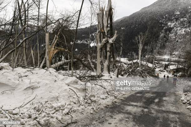 Broken trees are pictured after an avalanche on January 9 2018 in Les Houches near Chamonix / AFP PHOTO / PHILIPPE DESMAZES