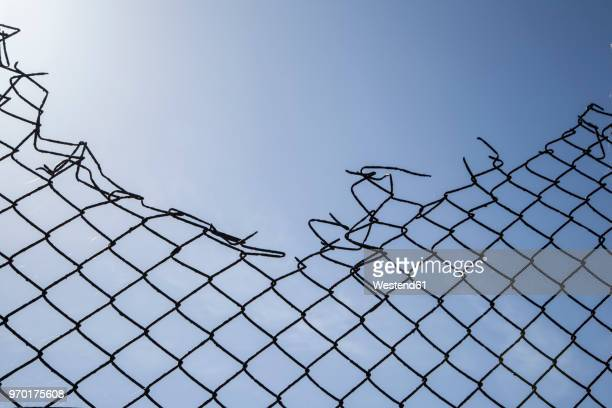 Broken wire mesh fence