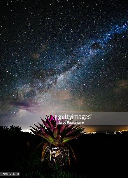 bromeliad and stars - bromeliad ストックフォトと画像