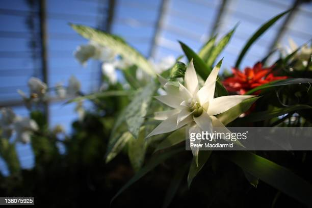 Bromeliad decorates a floral arch at the Tropical Extravaganza Festival 2012 in the Princess of Wales Conservatory Royal Botanic Gardens Kew on...