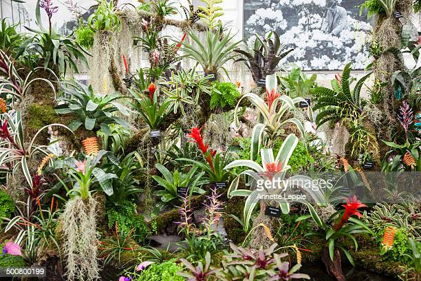 Bromeliad display at Chelsea Flower Show