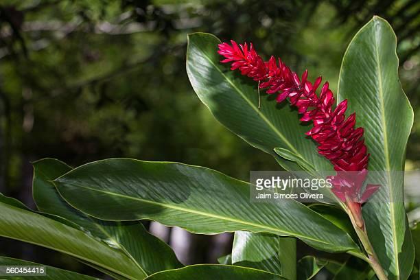 bromeliad plant with flower - bromeliad ストックフォトと画像