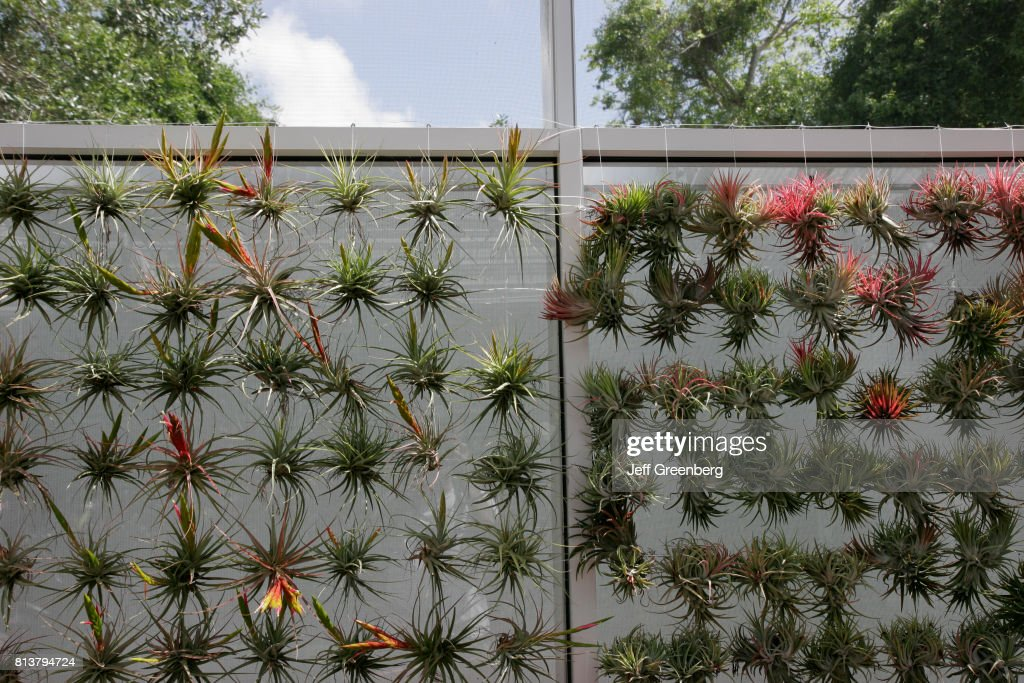 bromeliads in the fairchild tropical botanic garden news photo - Fairchild Tropical Botanic Garden