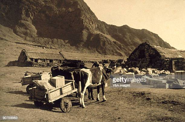 Bromide print. Photograph by Ernest R Ashton of the British dependency of Tristan da Cunha in the South Atlantic, one of the remotest islands in the...