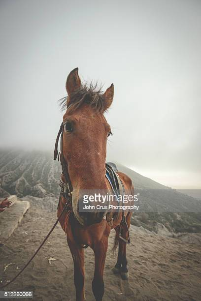 bromo horse - bromo crater stock pictures, royalty-free photos & images