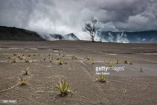 bromo volcano and bromo tengger semeru national park. - alex saberi stock pictures, royalty-free photos & images