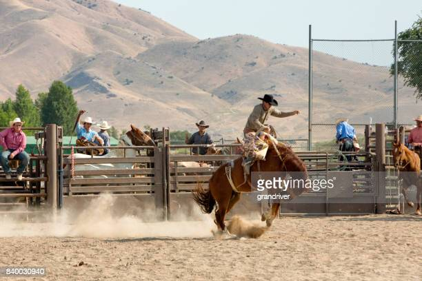 Bronc Rider in a Rodeo