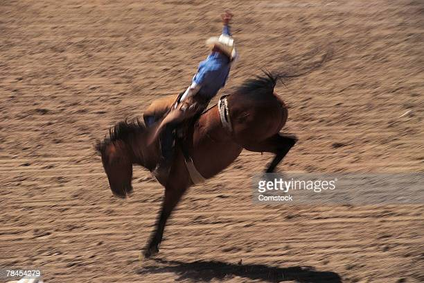 Bronco busting at rodeo in Cheyenne, Wyoming