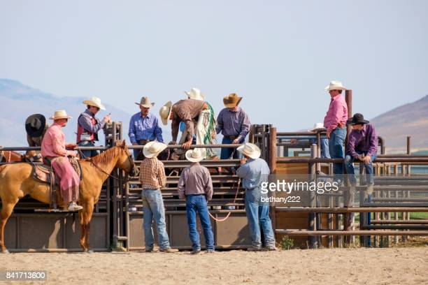 Bronco rider mounting his horse in the chute as a group of cowboys gather around the bull chutes having a discussion in preparation for the event to begin.