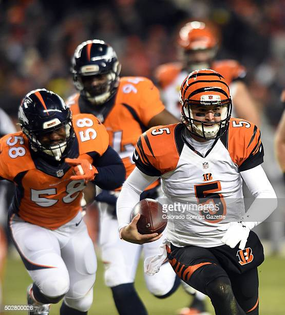 Broncos linebacker Von Miller left and linebacker DeMarcus Ware center chase Bengals quarterback AJ McCarron during the second quarter of a game at...