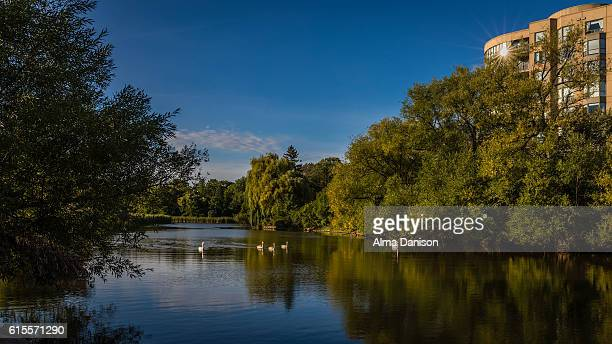 bronte creek - riverview park - alma danison stock photos and pictures