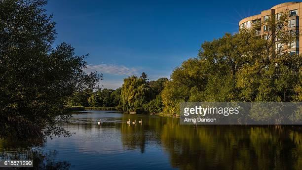 bronte creek - riverview park - alma danison stock-fotos und bilder