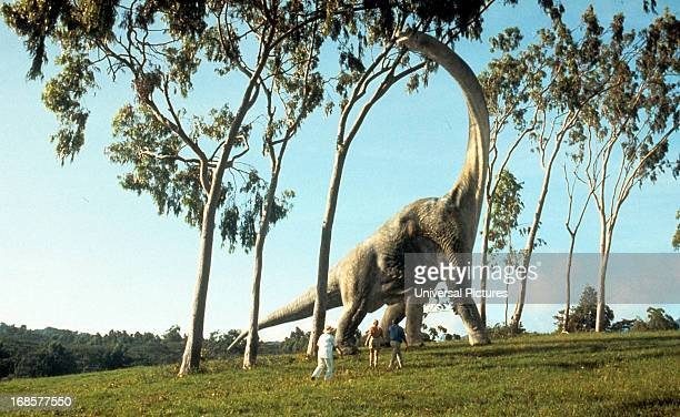 A brontosaurus eats leaves in a scene from the film 'Jurassic Park' 1993