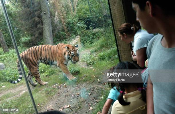bronx zoo, the bronx. - bronx zoo stock pictures, royalty-free photos & images