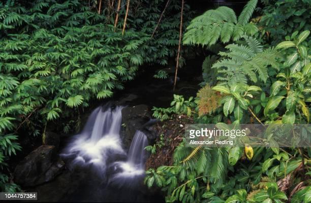 Brook in Akaka Falls State Park, Big Island, Hawaii, USA