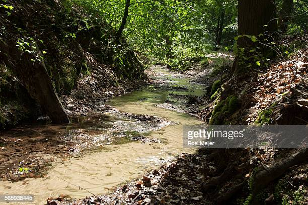 brook in dutch forest - gelderland stock pictures, royalty-free photos & images