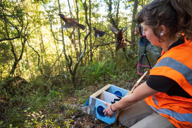 NZL: Endangered Native Birds Released At Brook Sanctuary In New Zealand