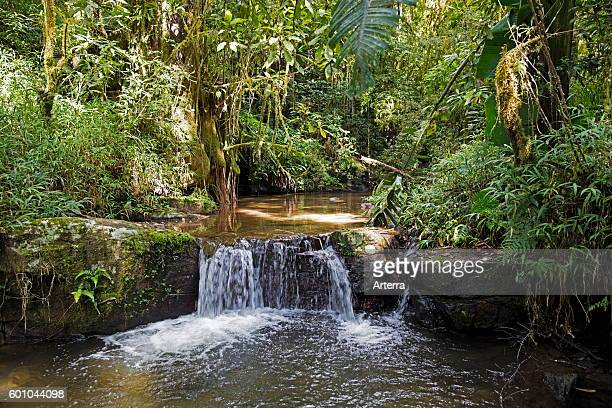 Brook with waterfall in tropical rainforest of the Ranomafana National Park Haute Matsiatra Madagascar Southeast Africa