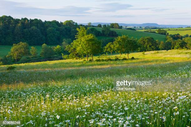 brookhampton cottage, herefordshire: - meadow stock pictures, royalty-free photos & images
