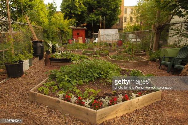 brooklyn community garden - flowering plant stock pictures, royalty-free photos & images