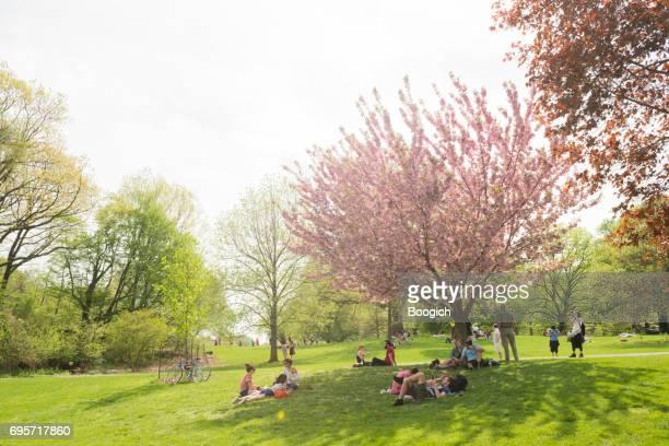 晴れた春の日にニューヨークのブルックリンのプロスペクト公園芝生 - プロスペクト公園 ストックフォトと画像