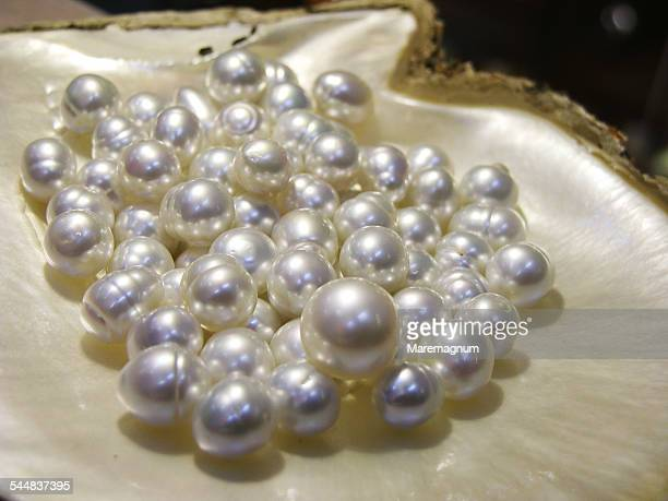 broome is the world capital for pearl cultivation - oyster pearl stock photos and pictures