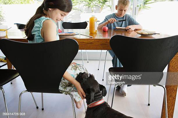 brother and sister (10-12) at table (focus on girl stroking dog) - dog eats out girl stock pictures, royalty-free photos & images