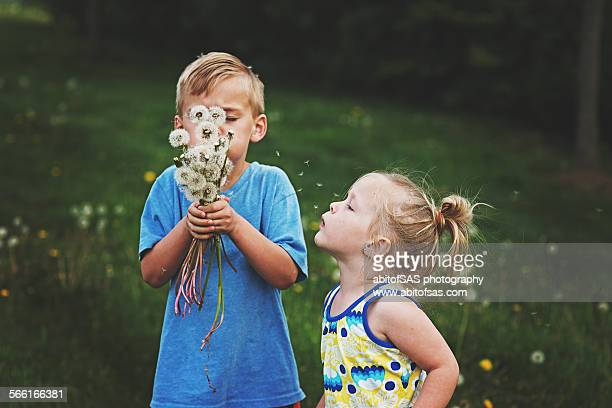 Brother and sister blow dandelions
