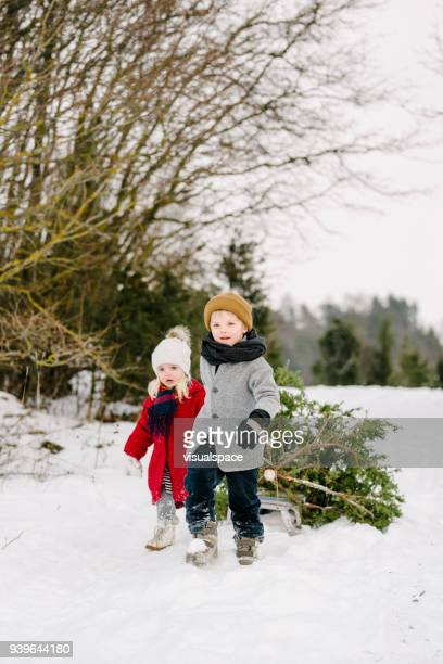 brother and sister dragging a christmas tree - country christmas stock pictures, royalty-free photos & images