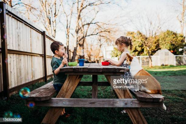 brother and sister eating lunch at picnic table with pet dog - golfküstenstaaten stock-fotos und bilder
