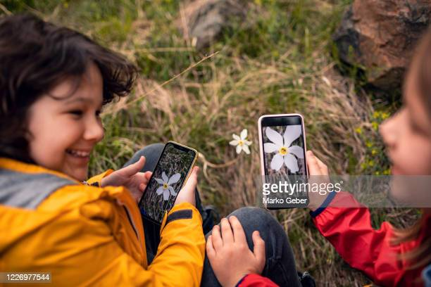 brother and sister taking photos of flowers - photographing stock pictures, royalty-free photos & images