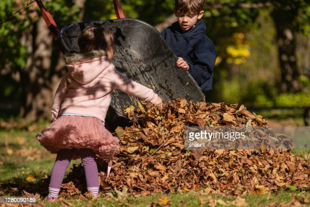 brother & sister gather leaves - 2 5 months stock pictures, royalty-free photos & images