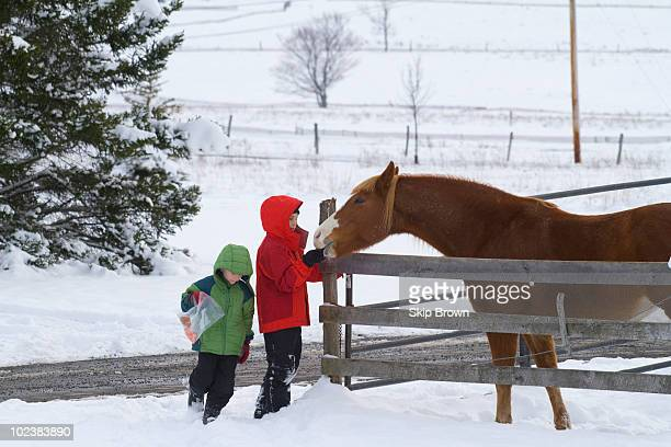 Brothers and Horse