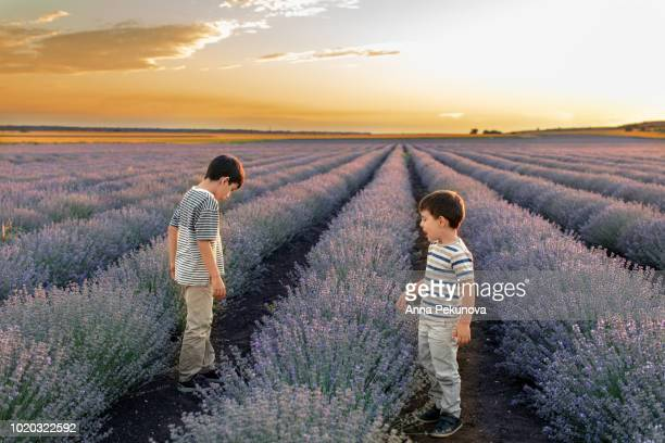 Brothers playing in lavender field