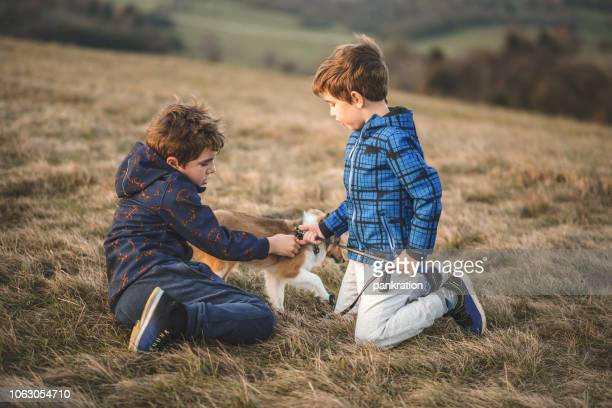 Brothers Putting a Leash on Their Puppy Dog