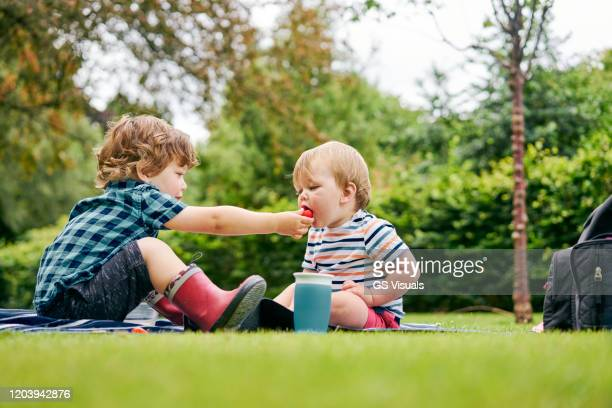 brothers sharing food in park - sibling stock pictures, royalty-free photos & images
