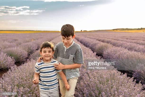 Brothers walking in lavender field
