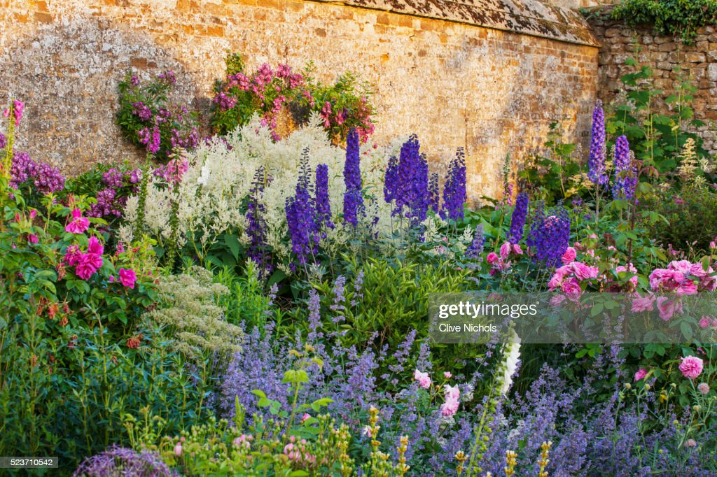 Broughton Castle, Oxfordshire: Border in The Walled Garden with Roses, Delphiniums, and Nepeta. Flow : Stock Photo