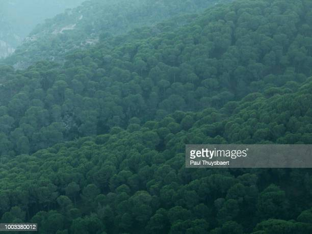 broumana hillside views - hill range stock pictures, royalty-free photos & images