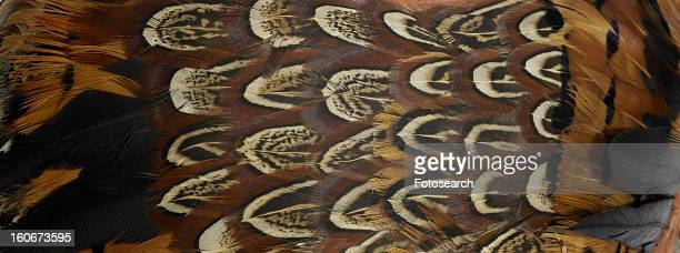 brown and black feathers close up - turkey feathers stock photos and pictures