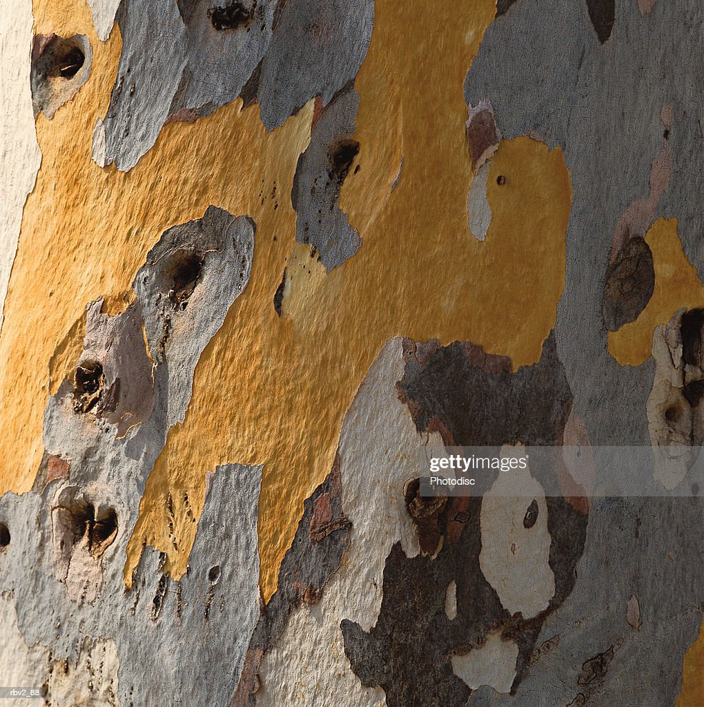 brown and gray color a tree trunk home to many holes : Foto de stock