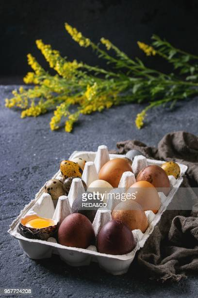 Brown and gray colored chicken and quail Easter eggs in paper box with yolk yellow flowers sackcloth rag over black concrete texture background Copy...