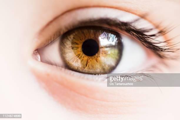 brown and green eye close up - iris ojo fotografías e imágenes de stock