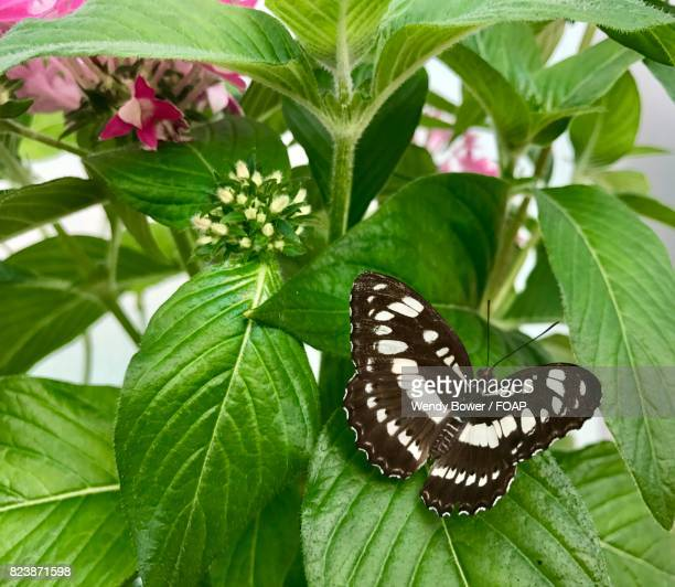 Brown and white butterfly on leaf