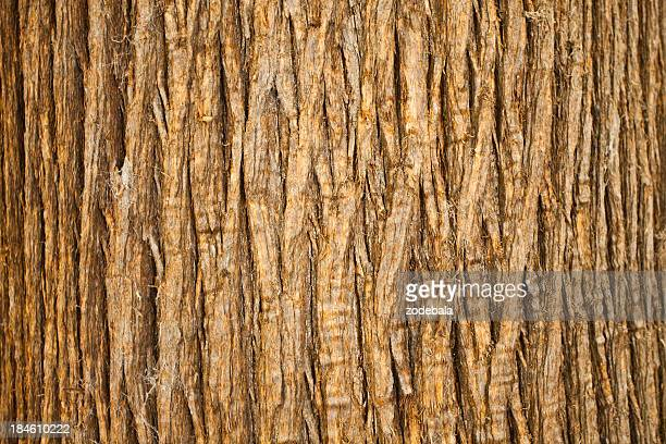 Brown Bark of Tree, Natural Pattern