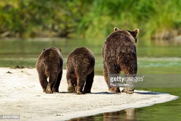 Brown Bear and Cubs, Katmai National Park, Alaska
