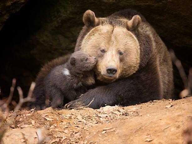 Brown Bear Family Wall Art